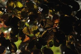 brown Leaves at back light, Autumn background