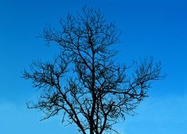 dark tree without leaves against a blue sky