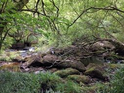 brook in Woodland at summer, uk, england, cornwall
