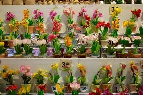 variety of orchids in flower pots