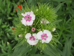 Flowers Plant White Pink Green