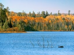 calm autumn forest landscape by the lake