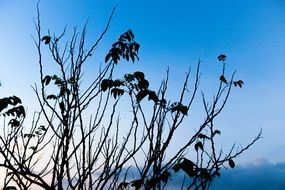 dark silhouettes of plants against a blue sky