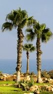 tall Palm Trees in Garden at sea