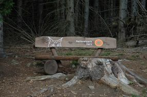 Wooden bank in a forest