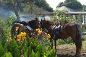 horses near a flower bed