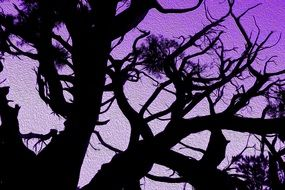 Purple sunset and trees