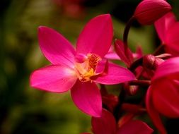 Bright pink flower blooms