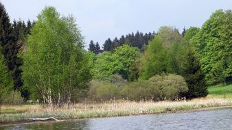 River bank green forest view, upper harz
