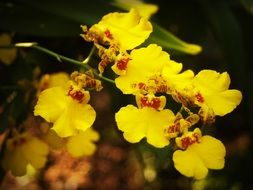 Yellow Flower Orchid Tropical plant