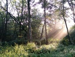 sun beams in the autumn forest