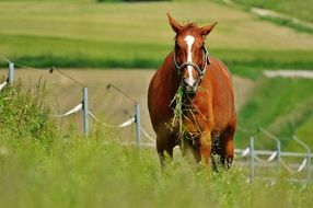 horse amid tall green grass in the paddock
