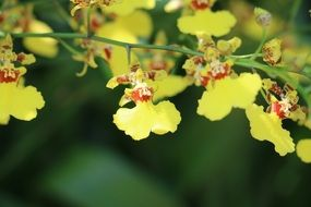 Flower Orchid Yellow