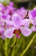 purple orchid flower therapy