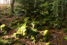 Forest Moss under green Trees scene