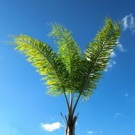 foliage of coconut tree on the blue sky