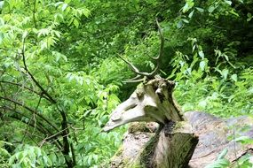 snag in the shape of a deer in a dense green forest