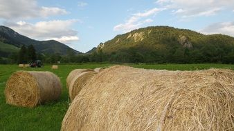harvesting hay on a green alpine meadow
