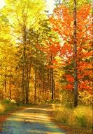 colorful Autumn Trees at road