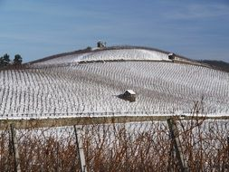 vineyard in wintertime