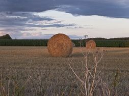bales of straw on stubble at dusk