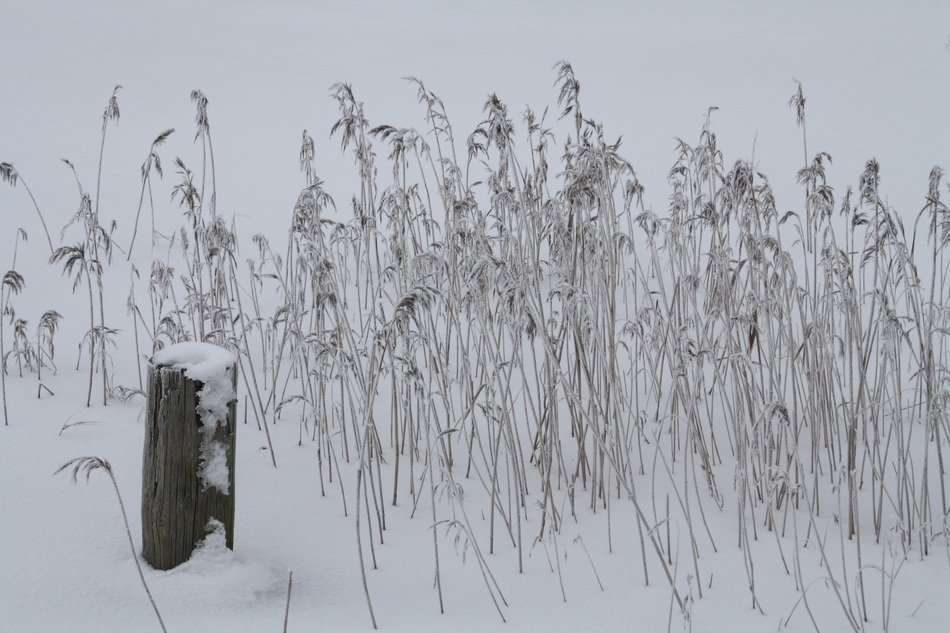 Winter Snowy plants view
