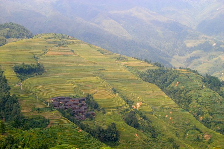 rice plantations in Asia, aerial view