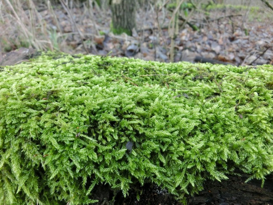 picturesque and pretty green Moss
