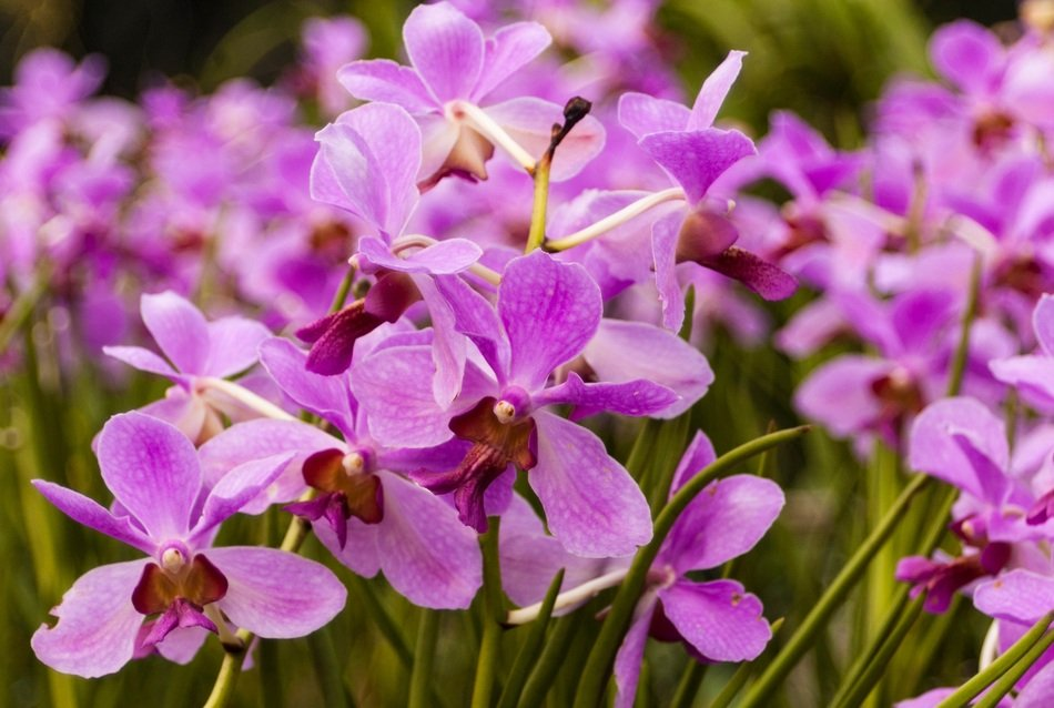 purple small orchids close-up