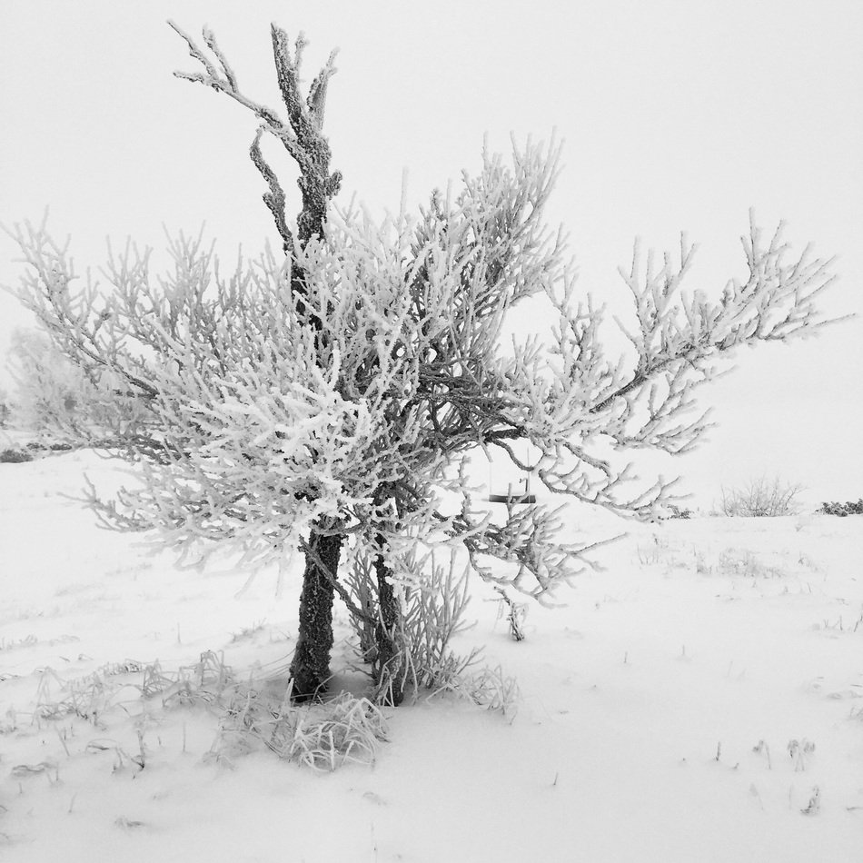 SnowyTree in Winter landscape
