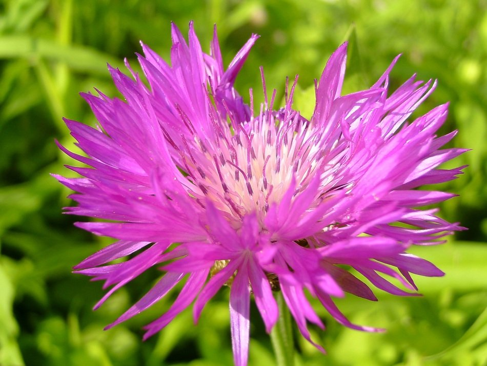 Close-up of the beautiful flower with pink petals among the green grass