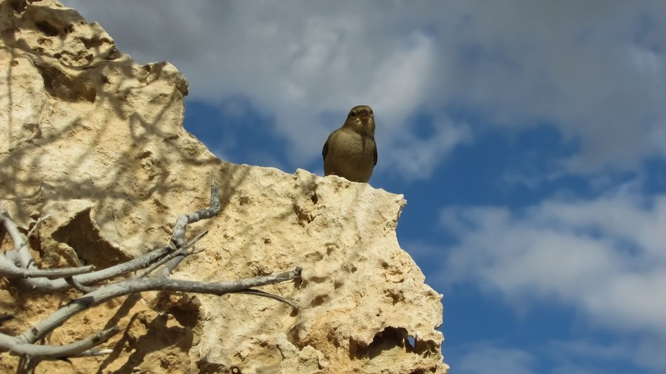 Sparrow on the rock