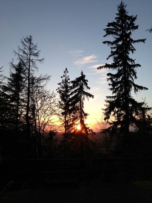 silhouettes of conifers on a sunset background