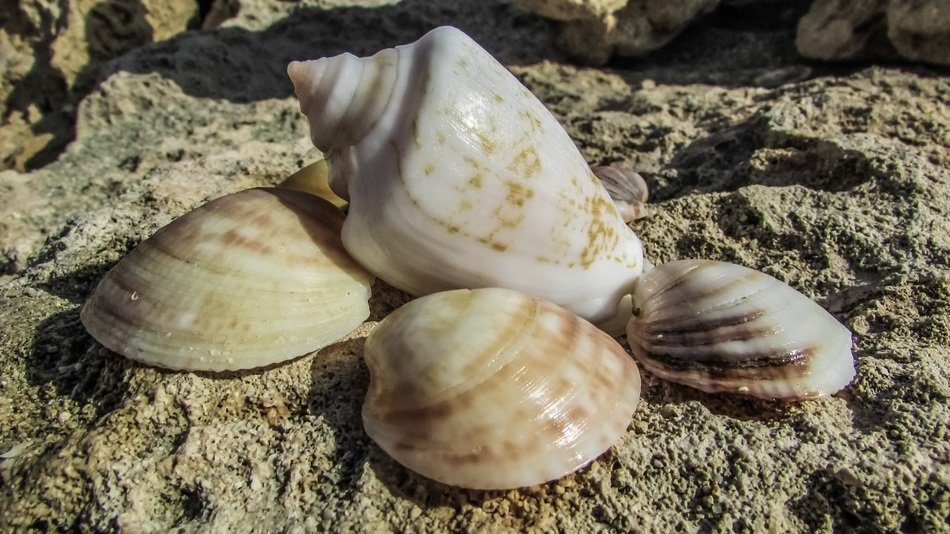 different shells on a stone on the beach