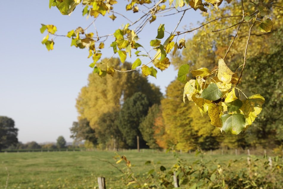 green trees near the field in autumn