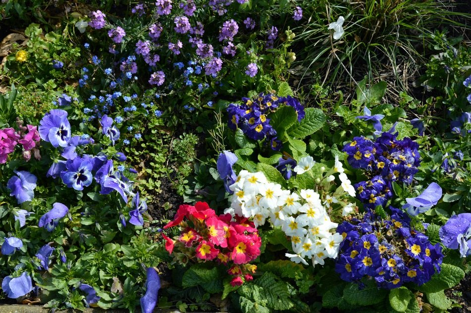 garden landscape of colorful flowers