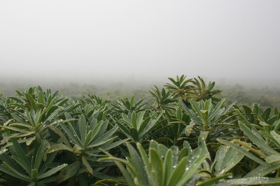 plants in drops of water in dense fog