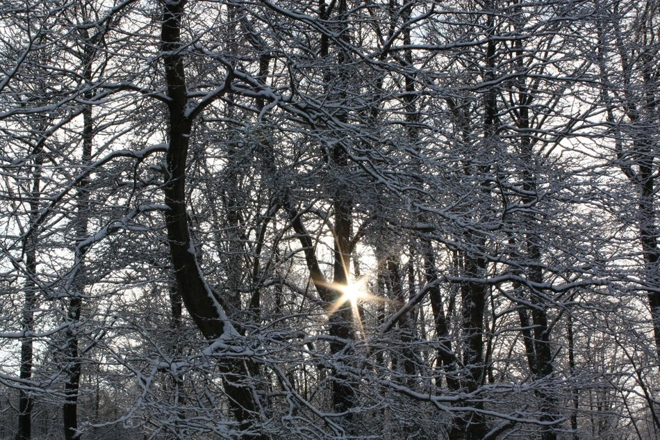 Photo of snowy forest