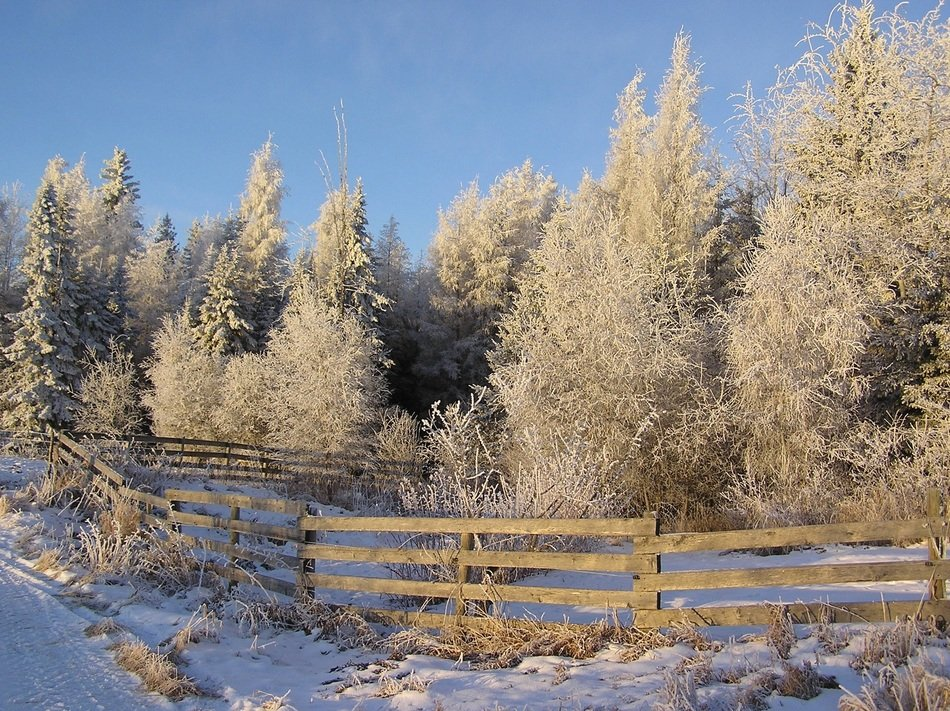 fence near trees in winter