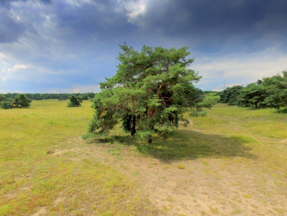 picture of a meadow by quadrocopter