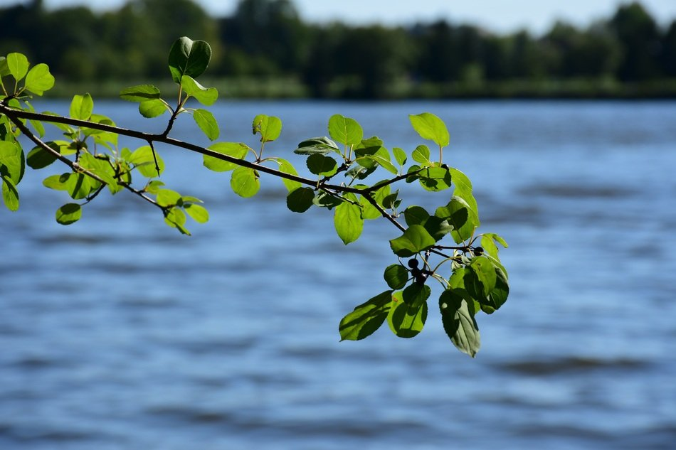 branch with leaves by the river