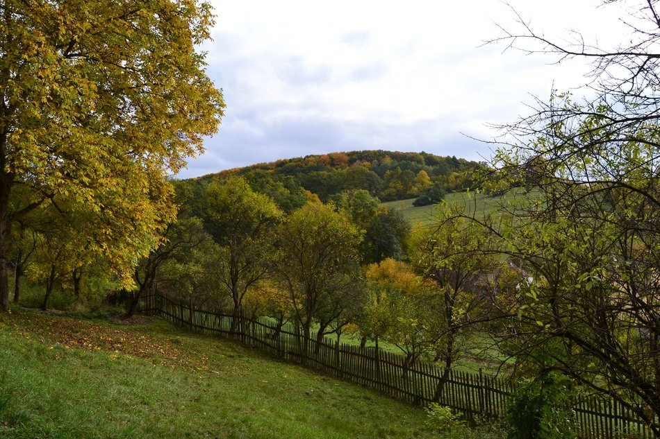 Landscape of Autumn meadows and forest