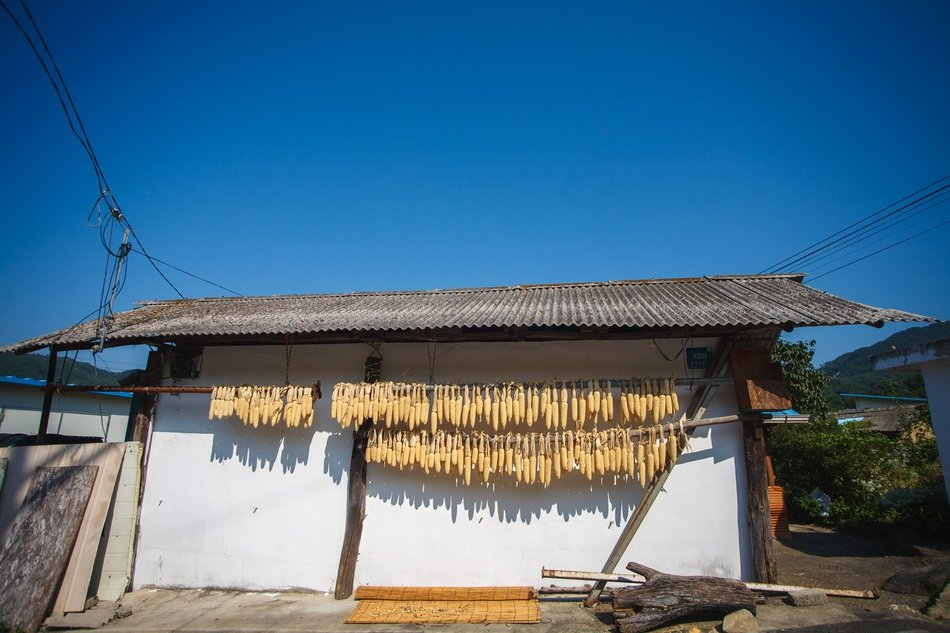 drying corn in the Korean countryside
