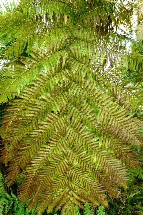 closeup view of green Fern Leaves in nature
