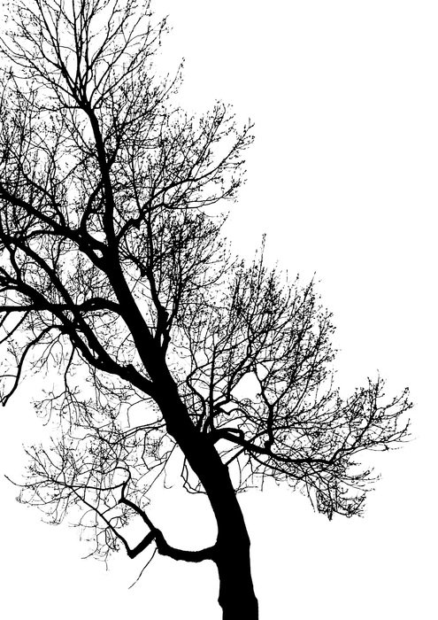 dark tree with bare branches as a contrast