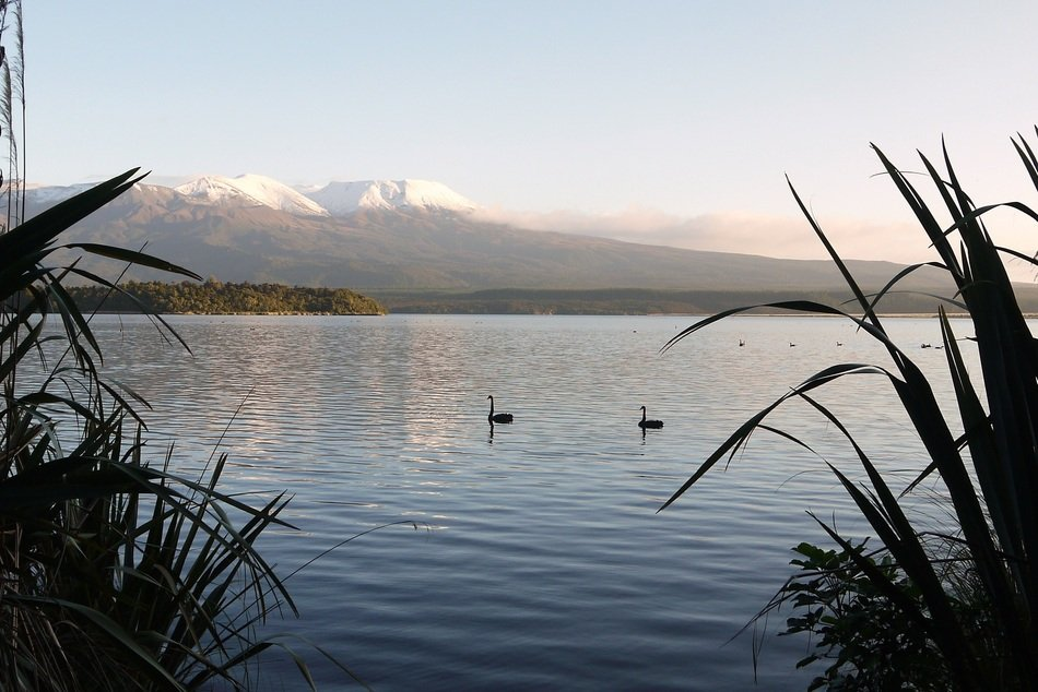 distant view of birds on the lake at the foot of the volcano