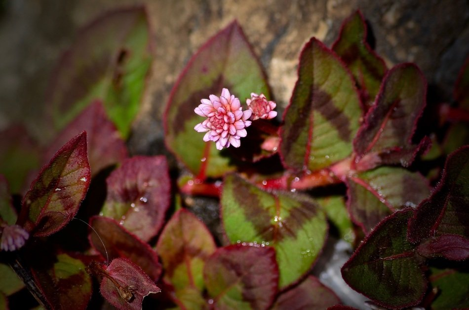 Tiny Pink Flower and Leaves