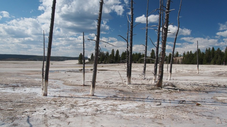 thermal springs in Yellowstone