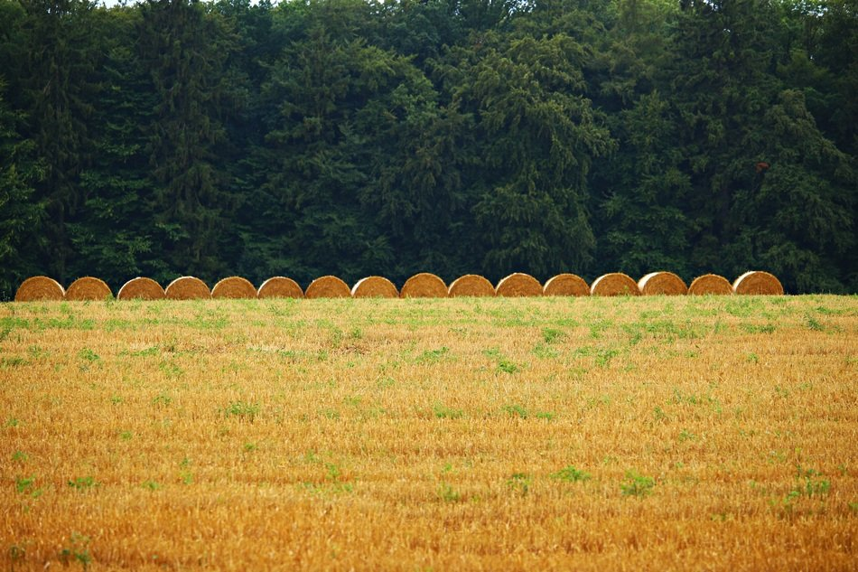 even row of straw bales on stubble