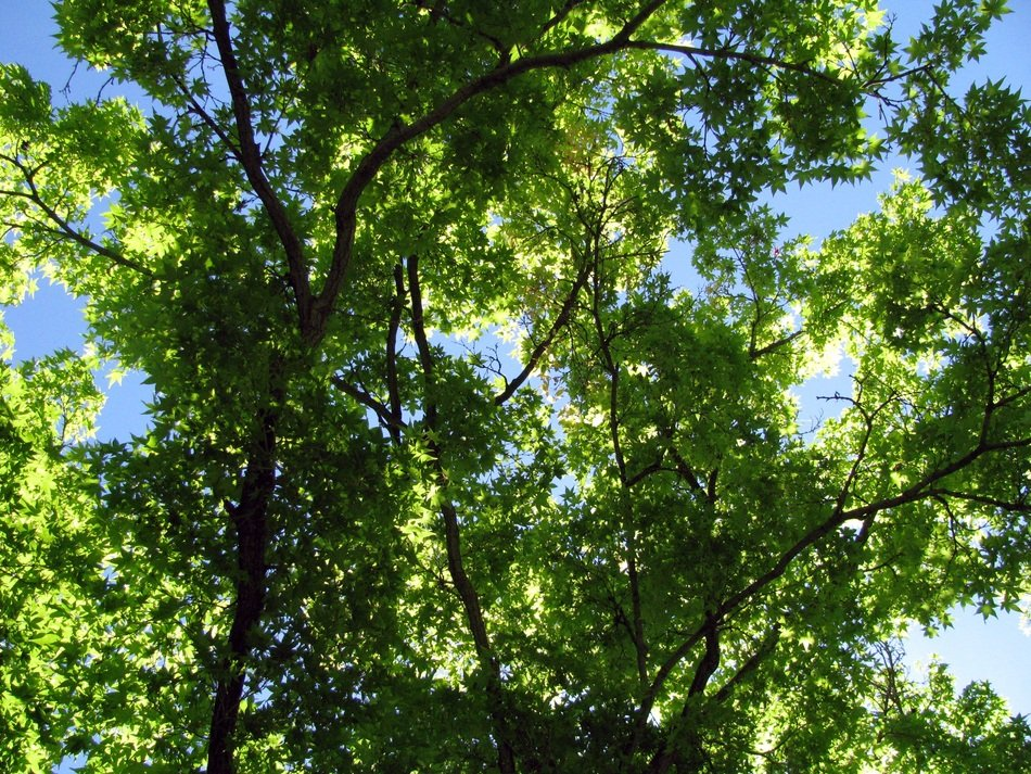 Green leaves of the trees against the blue sky